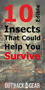 eating insects survival preppers wilderness outdoor camping doomsday earthquake